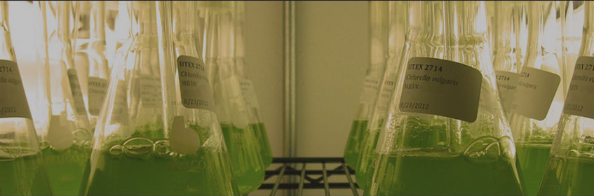 Beakers filled with green liquid on a shelf