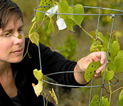 Marjorie Weber studies causes and consequences of plants adapting to coexist with their
