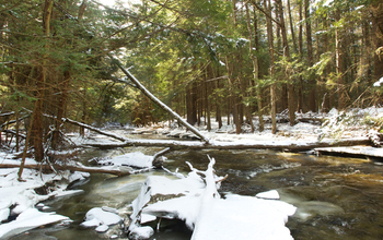NSF's Harvard Forest LTER site in winter