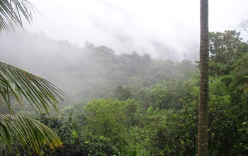 Dawn mist covers NSF's Luquillo Critical Zone Observatory and Long-Term Ecological Research sites.