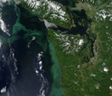 A large algae bloom off the Pacific Northwest coast occurred in July, 2014.