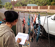 Researchers conduct a survey of fish sold on the roadside of a Pacific island.