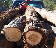 Truckload of fuel wood harvested from the pinyon-juniper woodlands of Utah by local tribal members.