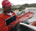 Man holding a red fish