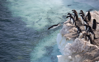 image of penguins near the ocean water