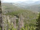 Gray trees killed by bark beetles between green trees in Rocky Mountain National Park.