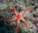 Photo of a starfish on a rock under water