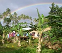 Photo of researchers' base camp  surrounded by banana trees and clothes out to dry in Fiji.