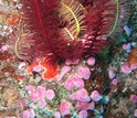 Photo of varios marine organisms in the ocean