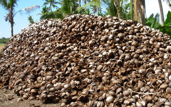 discarded coconut husks