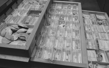 samples of Pleistocene fossils in boxes