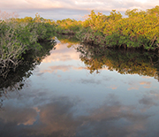 Florida Coastal Everglades