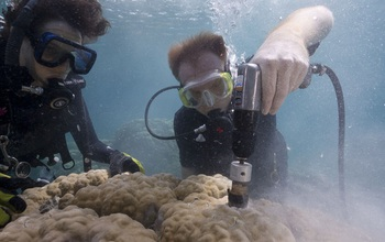 Scientists extract a coral core from a massive colony