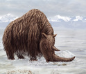 illustrtaion shwoing the ancestral woolly rhino in the Zanda Basin