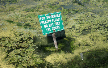 Sign on a lake with algae reads for swimmers health please don't feed the ducks