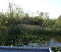 View from an airboat used to collect samples in the Florida Everglades.