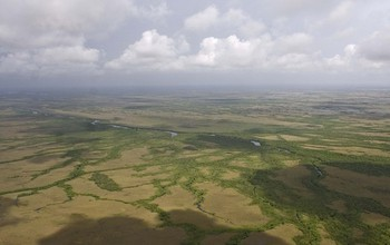 Mangroves (green) and freshwater marshes (light brown) surround the upper Shark River.