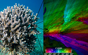 Pupa Gilbert developed a method for mapping crystal structures, such as those found in coral.