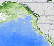 In 2015, one of the largest harmful algae blooms on record fouled waters along the West Coast.