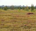 Image showing peatland methane on local field
