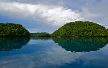A Rock Islands of Palau canal surrounded by trees.