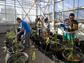 Researchers study plants in a greenhouse.
