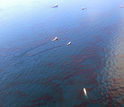 Boats on water with oil on the ground in the Gulf of Mexico