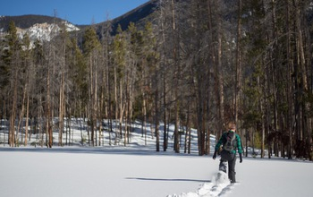 Man walking through snow near a forest with dead and live trees.
