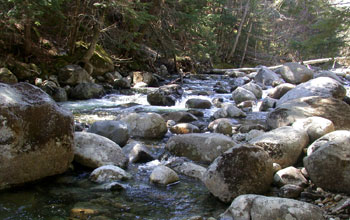 Photo of a stream with boulders in the streambed.