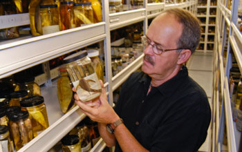 Image of scientist Larry Page in the fish collection at the Florida Museum of Natural History.