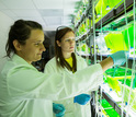 Two women in a lab with algal samples