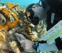 Researcher study Caribbean coral reefs