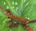 Picture of the anole, Anolis nitens, in leaf litter under the canopy of the Amazon rainforest.