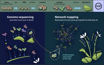 Interactions between previously sequenced Arabidopsis proteins are described in a new network map.