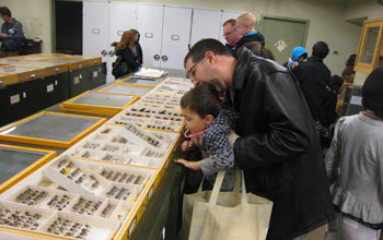 Photo of visitors peering at insects at the Hasbrouck Insect Collection at Arizona State University.