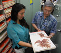 Scientists Roy Tsuda and Varnelle Magoon study a red algae specimen in Hawaii.