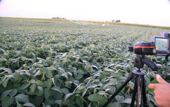Photo of rows of soybean and a scientist recording a video.