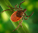 Ecological variables and tick-borne diseases are among the new grant topics.