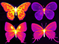 infrared photographs of butterflies