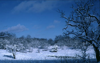 Winter in the oak savanna at NSF's Cedar Creek Long-Term Ecological Research site.