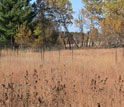 Experimental plots where prairie meets forest at Cedar Creek.