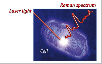 focusing a laser beam on a spot within a cell