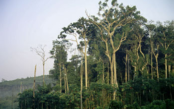 Fragment of mature Amazon forest within an agricultural area near Manaus, Brazil.