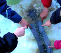 Photo shows children's fingers touching a lake sediment core.