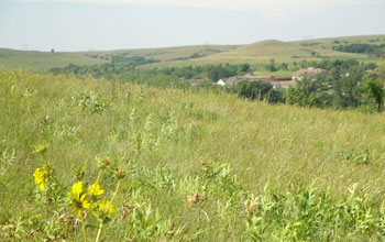 Image of prairie grass and wildflowers.