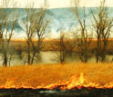 Image of a burning prairie.