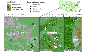 Map of the areas in California and Colorado where bobcats frequent were studied by scientists.