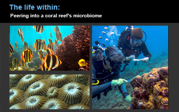 collage of images showing corals, divers