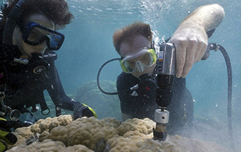 Scientists Anne Cohen (left) and Nathan Mollica extract core samples from a giant Porites coral