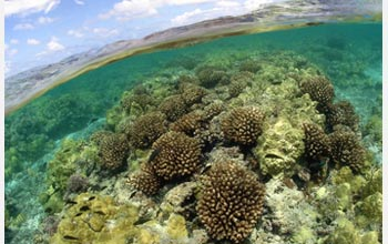 human impact on coral reefs Warming seawaters, caused by climate change and extreme climatic events, threaten the stability of tropical coral reefs, with potentially devastating implications for many reef species and the human communities that reefs support.